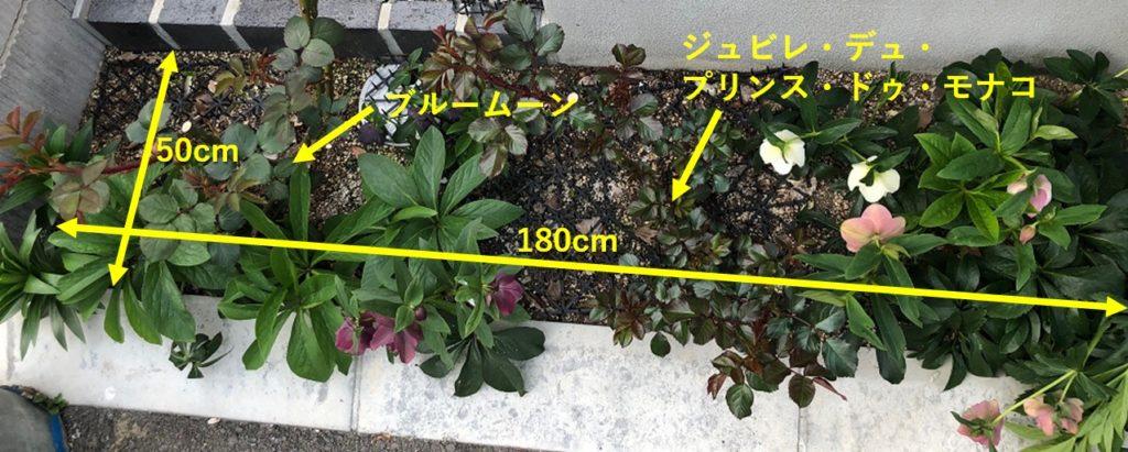 自宅の小さな花壇の写真1