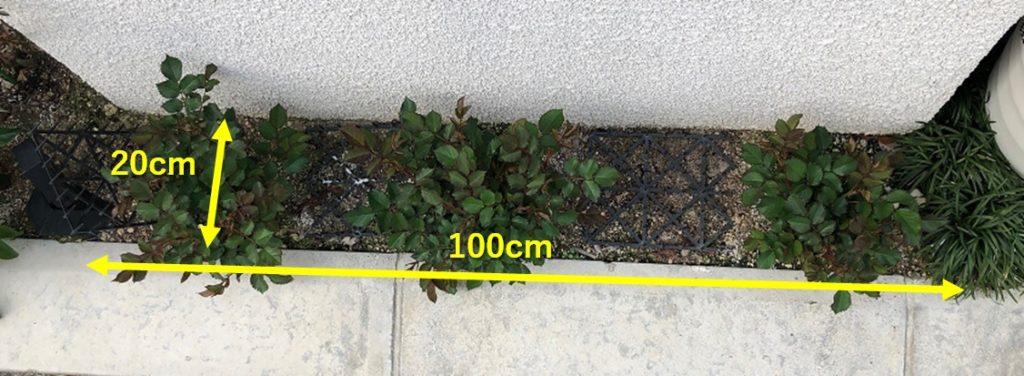 自宅の小さな花壇の写真2
