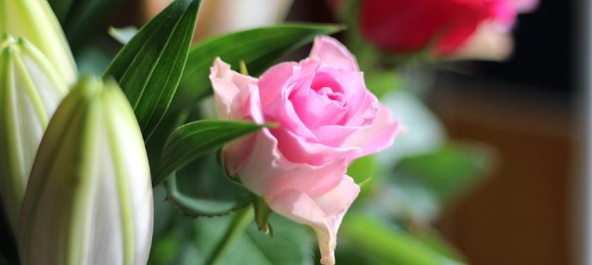 ミニ薔薇写真2