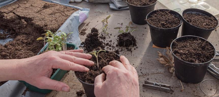 苗の植え付け写真