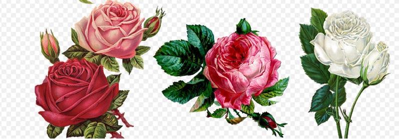 薔薇の絵画