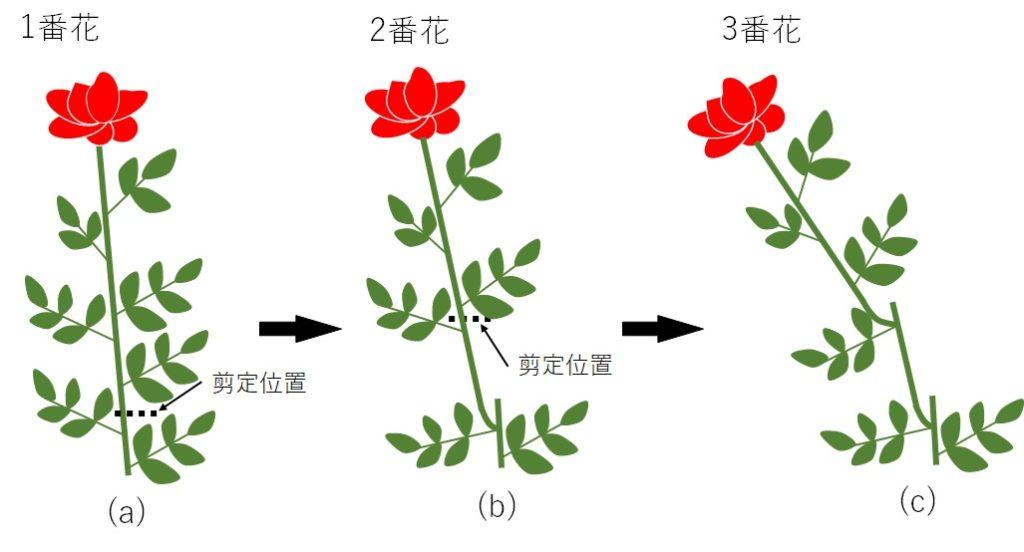 新芽の伸びる向きの説明図