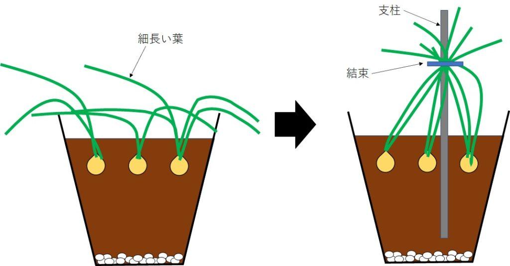 冬のアイリスの葉の管理方法