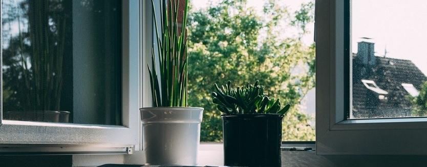 窓辺の植物の参考写真