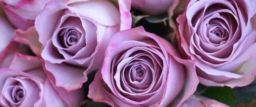 薔薇の写真1