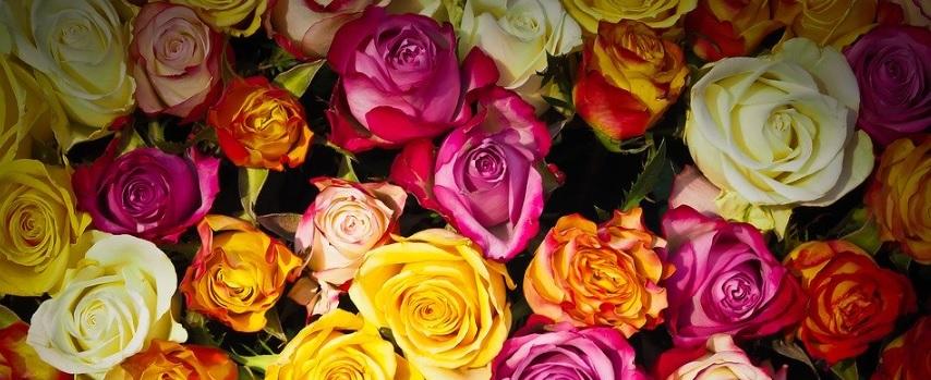 薔薇の花束の写真