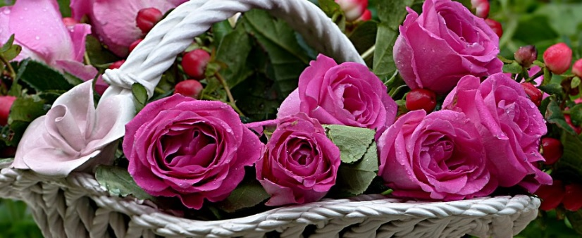 紫色の薔薇のバスケット