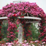 薔薇園は薔薇栽培を学ぶ最高の場所
