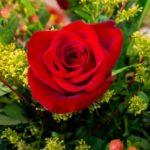 薔薇栽培に適した性格の持ち主とは?