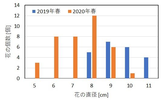 摘蕾の有無による花の大きさの比較グラフ