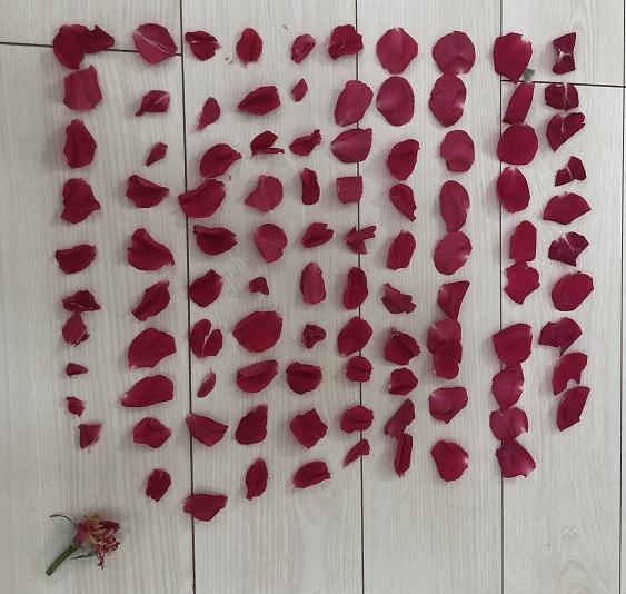ルージュピエールの花弁数