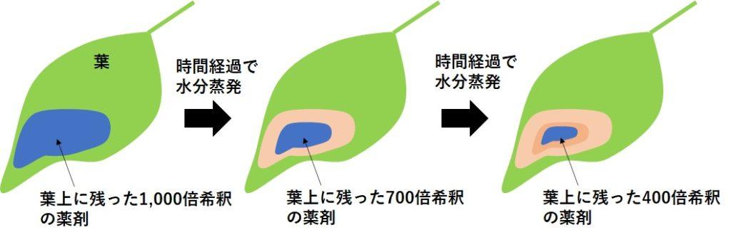 葉の上の薬剤の濃度が変わる理由を説明する写真