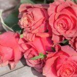 花弁数が多い薔薇の方が蕾が開きにくい -ボーリングの調査-