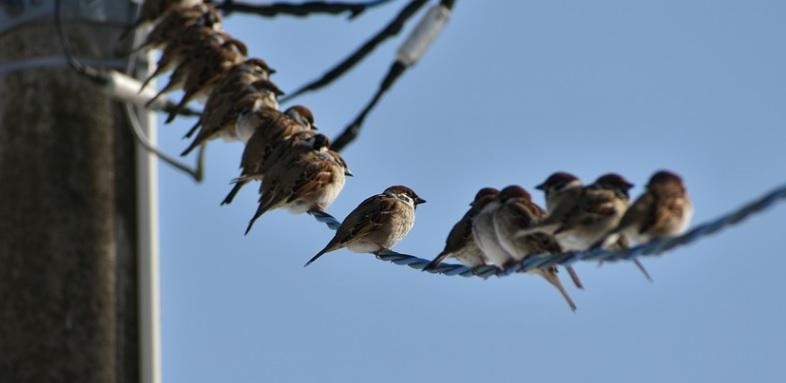 電線の防鳥対策を電力会社に依頼 [花壇の糞害解消]
