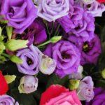 【検証】香りが強い薔薇は日持ちしないという噂は本当?