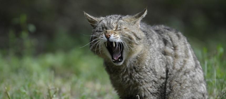 【園芸】花壇の野良猫の糞を防ぐ!-私が成功した対策-