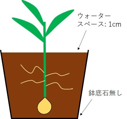 ユリ栽培の断面図