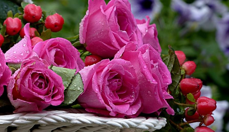 薔薇栽培って何が楽しいの?あらためて考えてみました