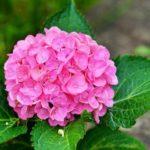 【神戸森林植物園】日本屈指のあじさい畑と子どもと楽しむ昆虫観察