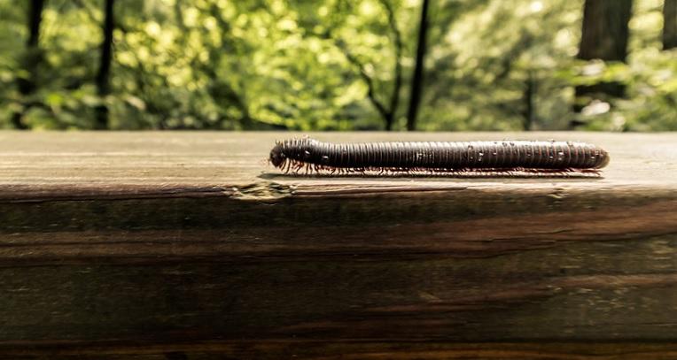 園芸の益虫「ヤスデ」は日々のお手入れで大量発生を防ぐ