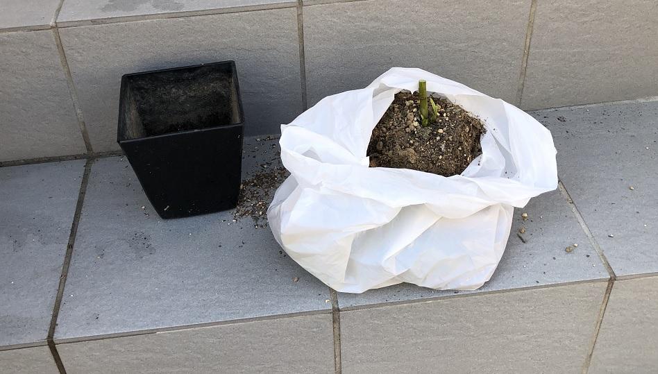 ゴミ袋の中で土と根を落とす作業の写真