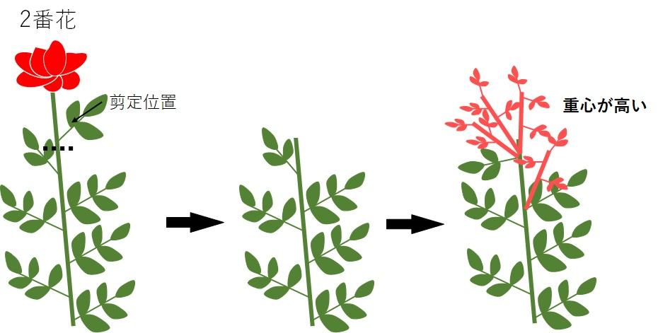 重心の高い薔薇の模式図