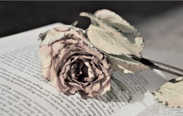 自分で栽培した薔薇のドライフラワーに挑戦!