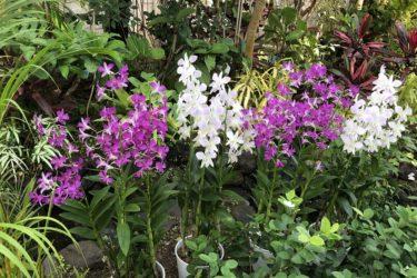 【伊丹市昆虫館】温室の蘭や観葉植物の鑑賞もお勧め!