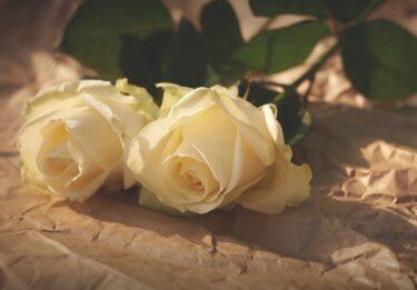 薔薇栽培の楽しさを今より広めるには何をすべきか?